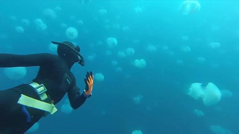 Image result for Mediterranean, jellyfish, egypt, photos