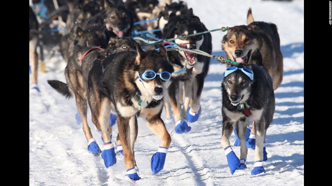 Image result for iditarod images