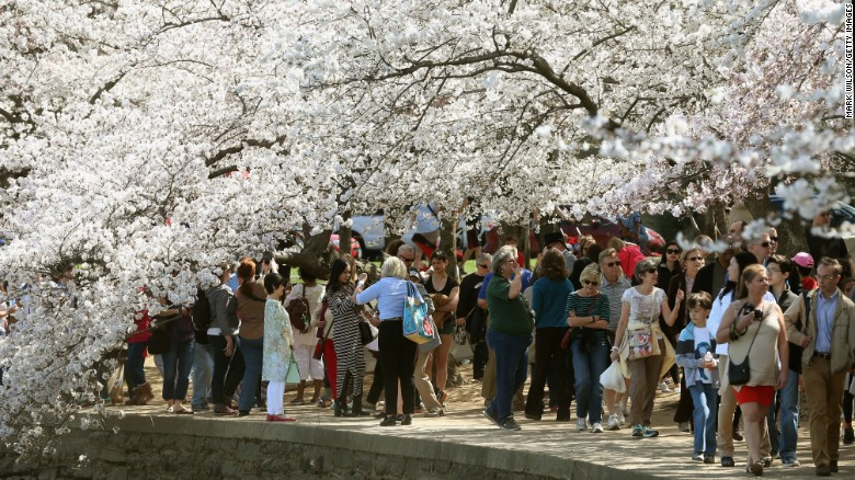 The 2017 National Cherry Blossom Festival runs from March 15 through April 16 in Washington. The scenes in this gallery were captured during last year's festival.