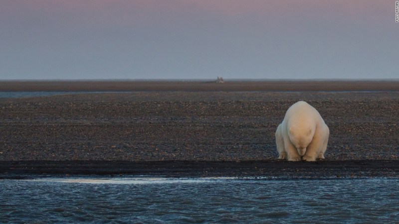 "The ""Climate Change -- In Focus"" exhibition shows the effects of climate change. <br />Pictured: A solitary bear sits on the edge of one of the Barter Islands, Alaska. There is no snow, when at this time of year, there should be,"" wrote photographer Patty Waymire."