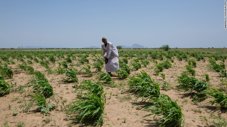Desertification is encroaching on valuable agricultural land -- affecting the livelihoods of many Sudanese farmers.
