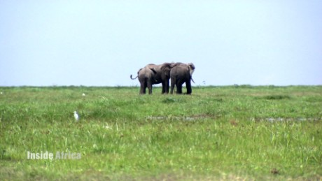 inside africa elephants b_00003419.jpg