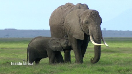 inside africa elephants c_00035414.jpg