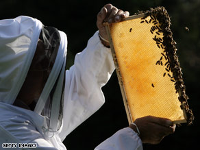 A British beekeeper checks up on one of his colonies. Bee populations fell by 30 percent last year.