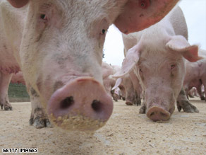 Swine flu commonly affects pigs and occasionally infects people in contact with pigs.