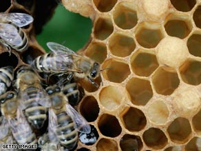 Bee populations have recently seen sharp declines across the United States, Canada, and Europe.