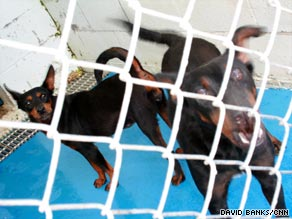 Two dogs from the pack that killed two people await euthanasia Tuesday at a shelter in northeast Georgia.