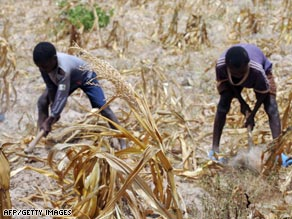 Two young boys plow their dry cornfield in Kwale, Kenya which has been blighted by drought.