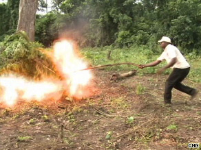 A agent torches marijuana plants found in the Nigerian forests but there could be hundreds more farms.