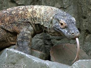 Komodo dragons kill their prey with an extremely toxic bite.