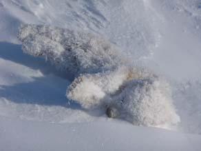 A frozen Polar Bear cub. Courtesy: Polar Bears International