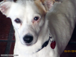 Josiah Allen's dog 'Paco' never arrived in Detroit after it was checked in with Delta in Mexico City.