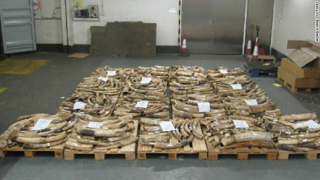 Hong Kong Customs seized ivory tusks and ornaments weighing about 8,406 pounds inside two containers.