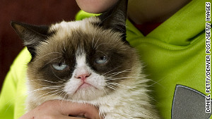 This is the feline face that\'s creating a stir online -- and live in Austin, Texas, too.