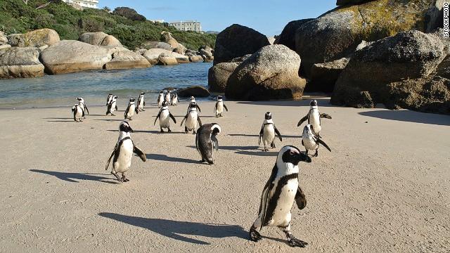 22. Boulders Beach, Cape Town