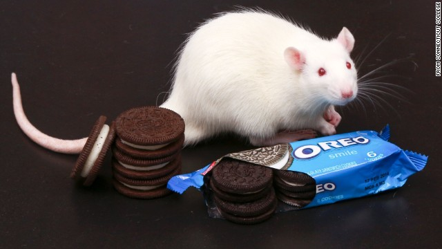 cookies and rat