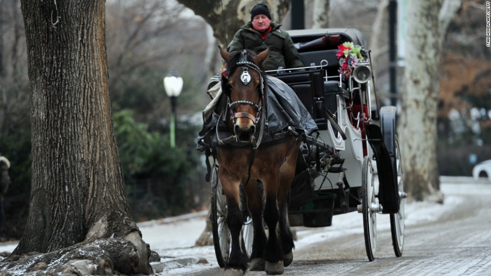 Opinion Help The Horses Ban Carriage Rides
