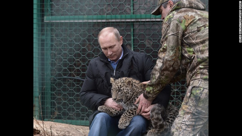 Russian President Vladimir Putin holds a Persian leopard cub in February 2014 at a breeding and rehabilitation center in the Black Sea resort of Sochi. Perhaps the most important vote in Russia's public selection of a new Olympic mascot was cast when Putin said he wanted a funky leopard to represent the 2014 Sochi Winter Games. Browse through for more photos of Putin trying his hand at different activities.