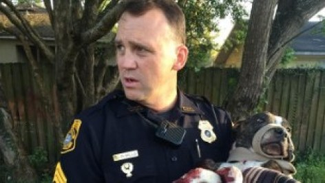 Tampa police Sgt. R. Mills carries Cabela after freeing her