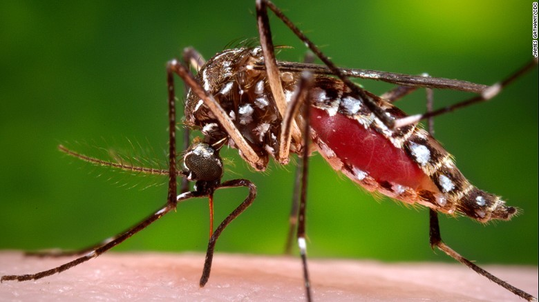 Dengue virus is carried by the Aedes mosquito. A bite from a mosquito harboring the virus can result in headaches, rashes and severe and joint pains. In serious cases, it can cause internal bleeding and death.