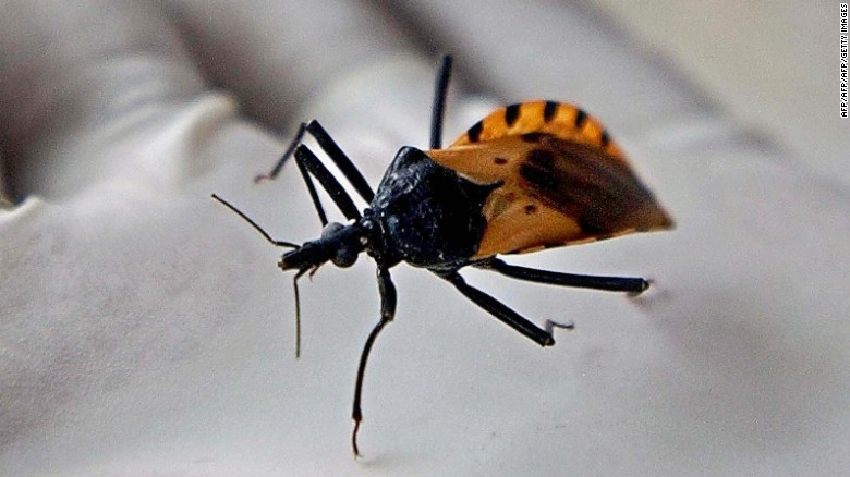 """Chagas disease is spread by the triatomine bug  -- nicknamed """"kissing bugs"""" -- which carries the parasite Trypanosoma cruzi. Over time, the parasite can chew through cardiac muscle and cause heart failure causing an estimated 11,000 deaths globally each year."""