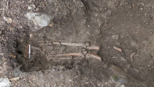 Lower leg bones were in the grave, but the upper body was tangled up in roots.