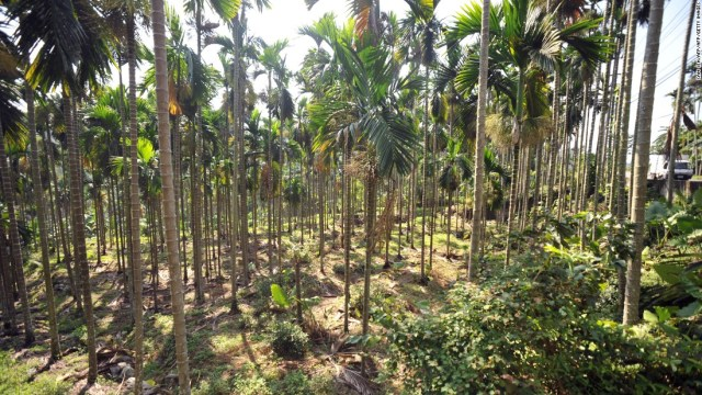 Taiwan is trying to incentivize local farmers to change crops and cut the supply of the betel nut. Some 4,800 hectares of betel nut farming land are expected to be transformed into cultivation for crops like tea, citrus fruits or mango.