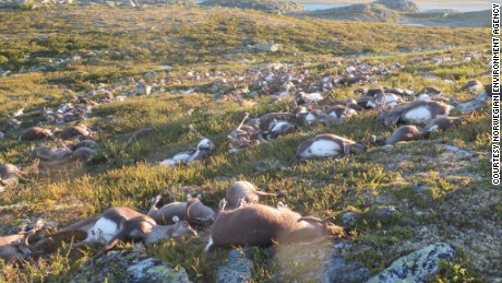 Lightning kills over 300 reindeer in Norway