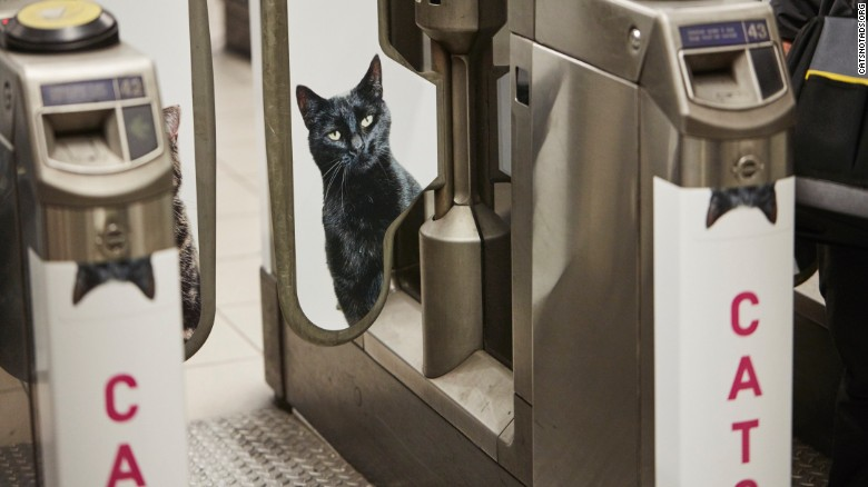 A black cat watches through barriers