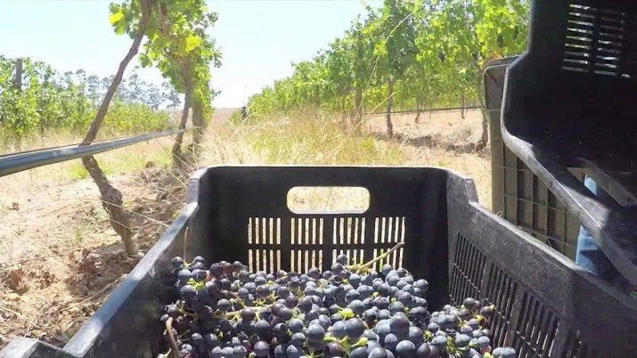 South Africa's booming wine industry