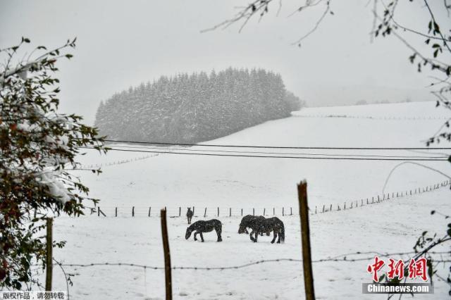 西班牙西北部多地降暴雪 公路关闭上千户人家断电