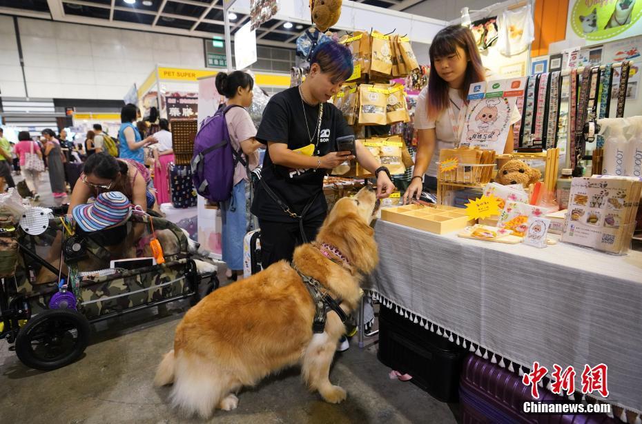 香港優質寵物用品展開幕-中新網