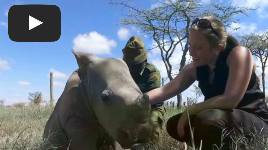 A Day with Ringo the Rhino