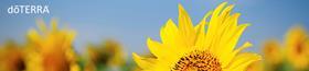 Sunflower.165009.jpg