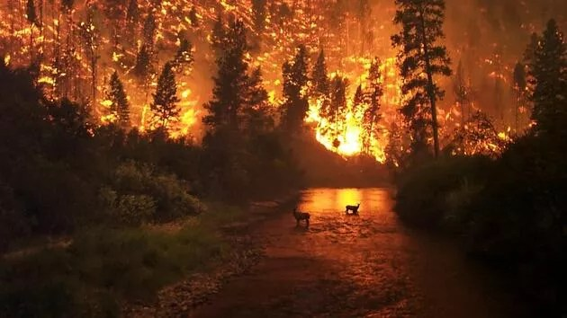 Herkes bunu merak ediyor: Orman yangınları aynı anda nasıl başladı?