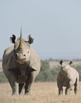 Dia Mirza, rhino calf