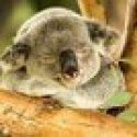 Chubby Botak Koala | Singapore Food Blog, Travel and Lifestyle