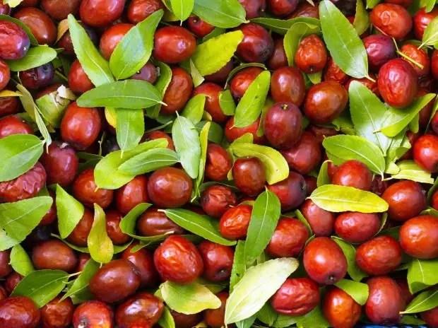 hünnap meyvesi hangi hastalıklar iyi gelir