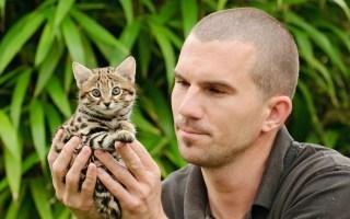【猫咪百科】世界上最小的猫种之一,仅有巴掌大小,却号称能扳倒长颈鹿!——黑足猫