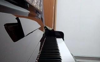 Flower Dance 钢琴