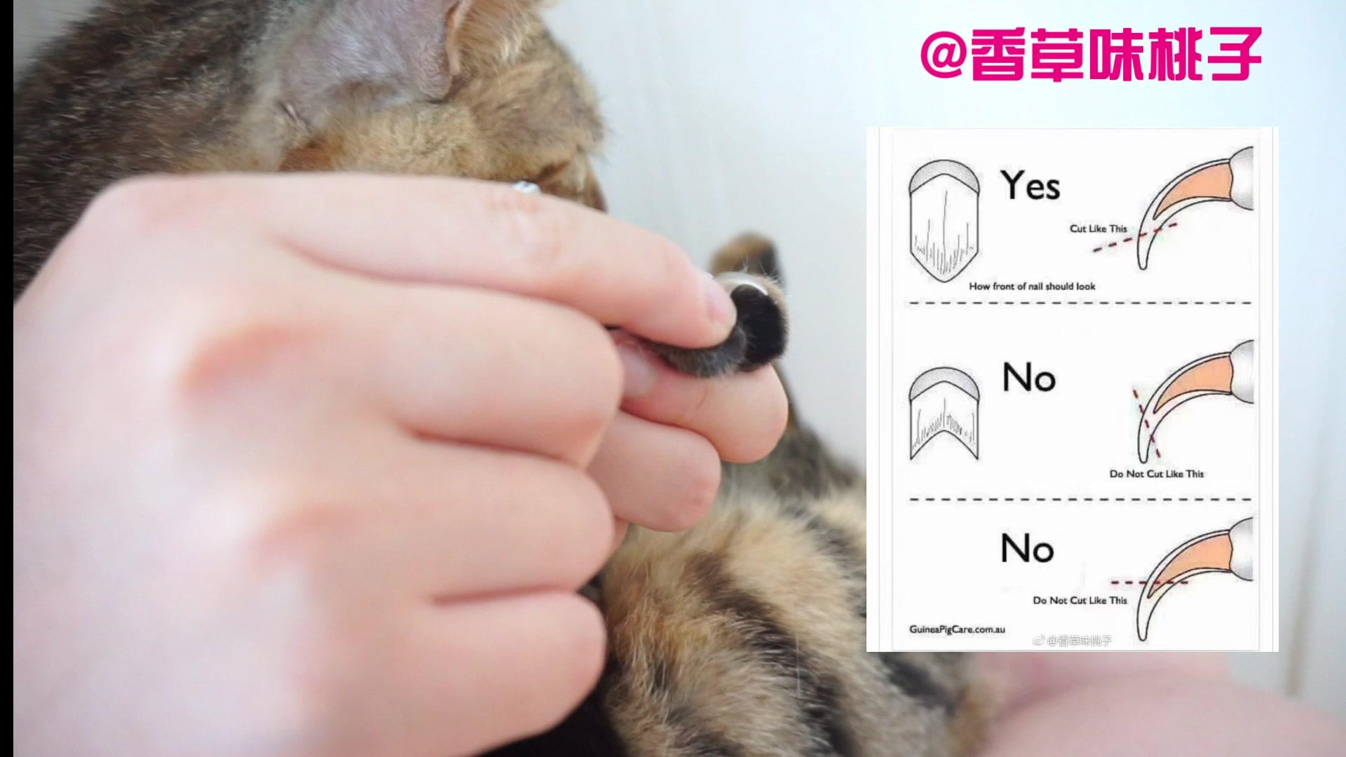 【桃子】如何一個人給貓剪指甲@香草味桃子_嗶哩嗶哩 (゜-゜)つロ 干杯~-bilibili