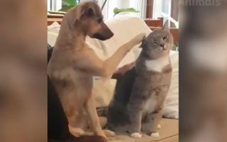 【????宠物合集】沙雕宠物们的沙雕操作 爆笑