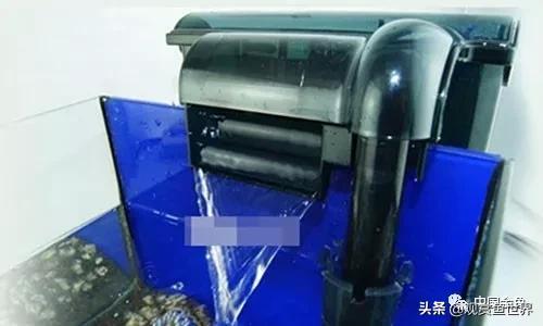 「建議收藏」九種魚缸過濾器系統的性能對比 - 每日頭條