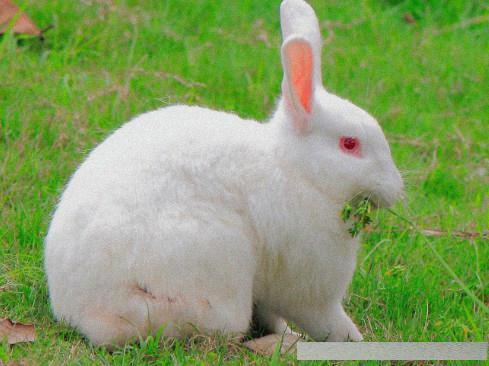 兔子軟萌又可愛,沒辦法行動,兔兔看著超美櫻花全盛開的反應讓大家都秒治癒! - boMb01