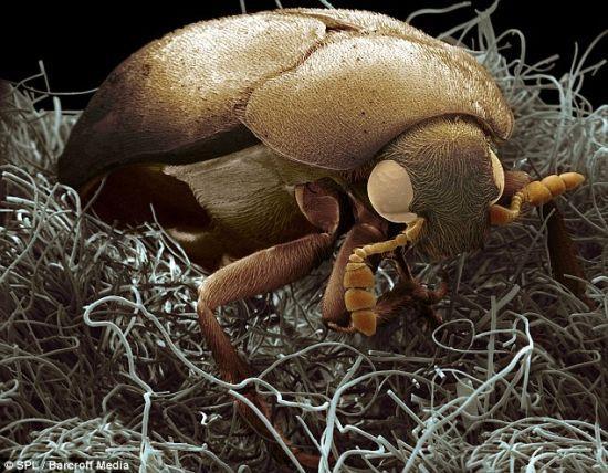 攝影圖集:殺蟲小竅門有哪些?下面一起來看看吧! - 每日頭條