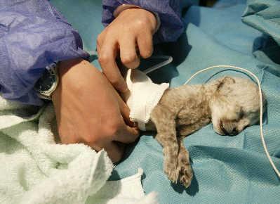 犬腎衰竭-讓很多狗爸狗媽聞風喪膽的疾病之一 - 每日頭條