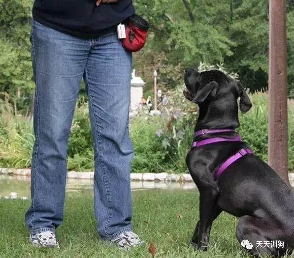 如何訓練狗狗散步時不要暴沖? - 每日頭條