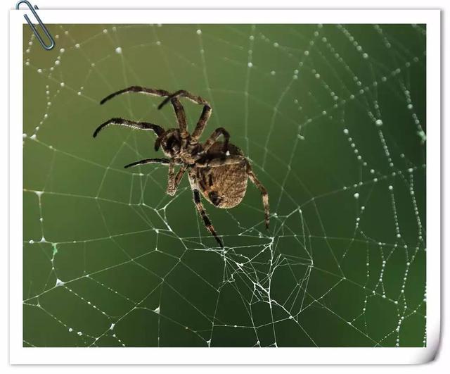 不是雞湯:蜘蛛的智慧 - 每日頭條