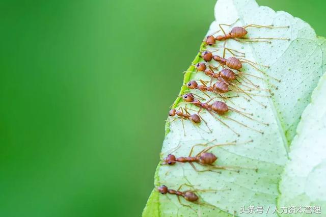 螞蟻王國的群體智慧 - 每日頭條