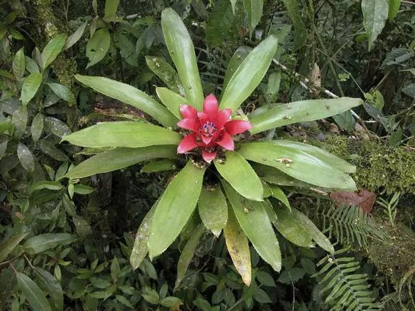 言植空間,生態造景,植物科普,積水鳳梨的原生環境 - 每日頭條